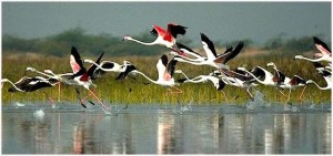 keoladeo-bird-sanctuary-in-rajasthan