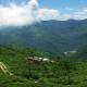 makaibari-tea-garden
