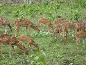 Bibhutibhushan Wild Life Sanctuary-deer
