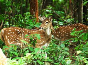Hazaribagh-Wildlife-Sanctuary