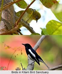 Kitam-birds