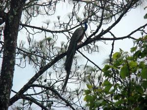 Kitam-birds-santuary