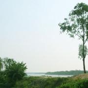 Raidighi