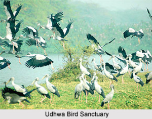 Sahebganj-Udhwa-Bird-Sanctuary