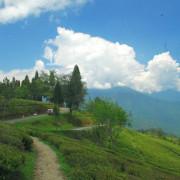 temi-tea-garden