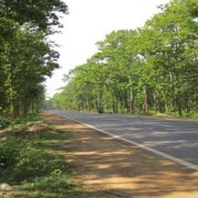 Joypur Forest
