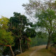 Piyali Island